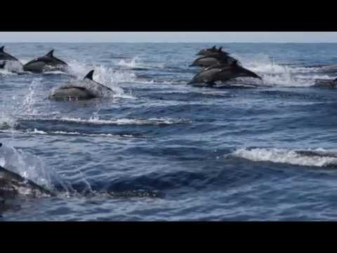 05-06-2014 common dolphins