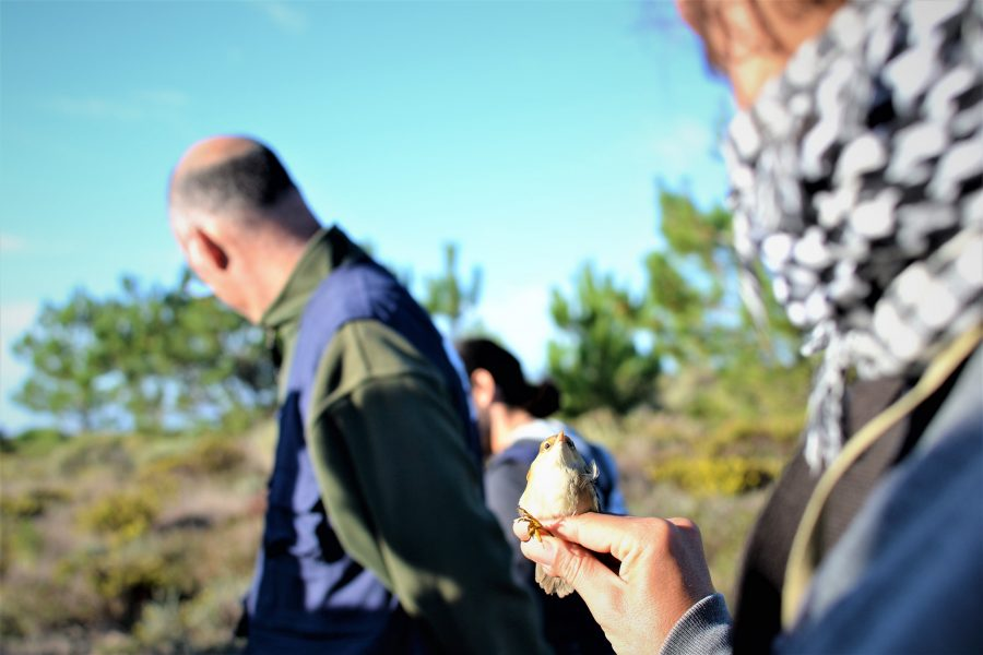Vögel beobachten an der Algarve in Sagres