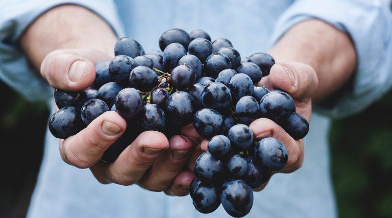Bio-Wein aus dem Alentejo mit Goldenem Korken ausgezeichnet