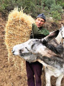 Eselwanderungen an der Algarve. Fütterung mit Stroh