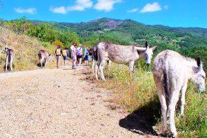 Eselwanderungen an der Algarve am Hang des Picota-Bergs