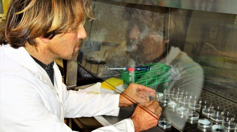 Stammzellen und ihre Entwicklung visualisiert Bioinformatiker Matthias Futschik von der Universität der Algarve