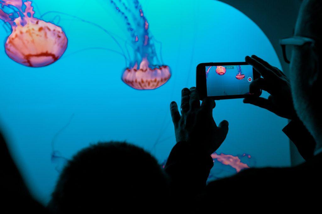 Giftquallen wie die Portugiesische Galeere findet man nicht im Aquarium