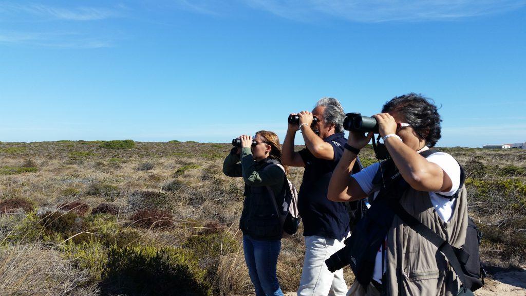 Vogelbeobachter mit Ferngläsern auf den Algarve-Felsklippen bei Sagres