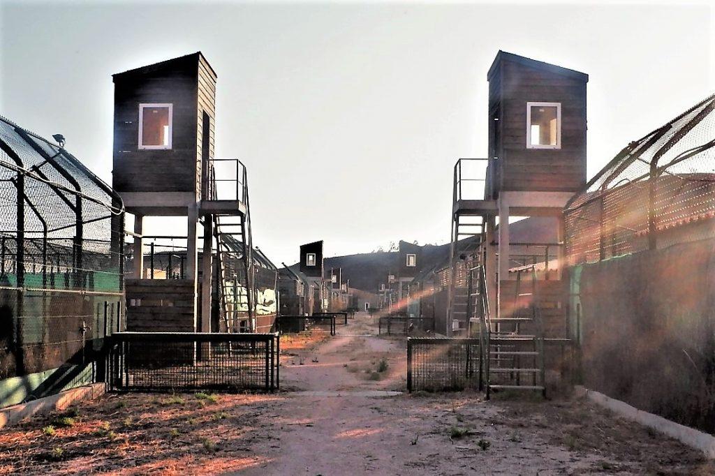 Iberischer Luchs aus Algarve-Aufzuchtzentrum in Silves wegen Waldbränden evakuziert