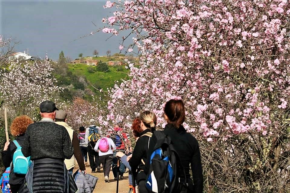 Mandelblüte auf dem Weg zu Alta Mora in Castro Marim an der Ost-Algarve