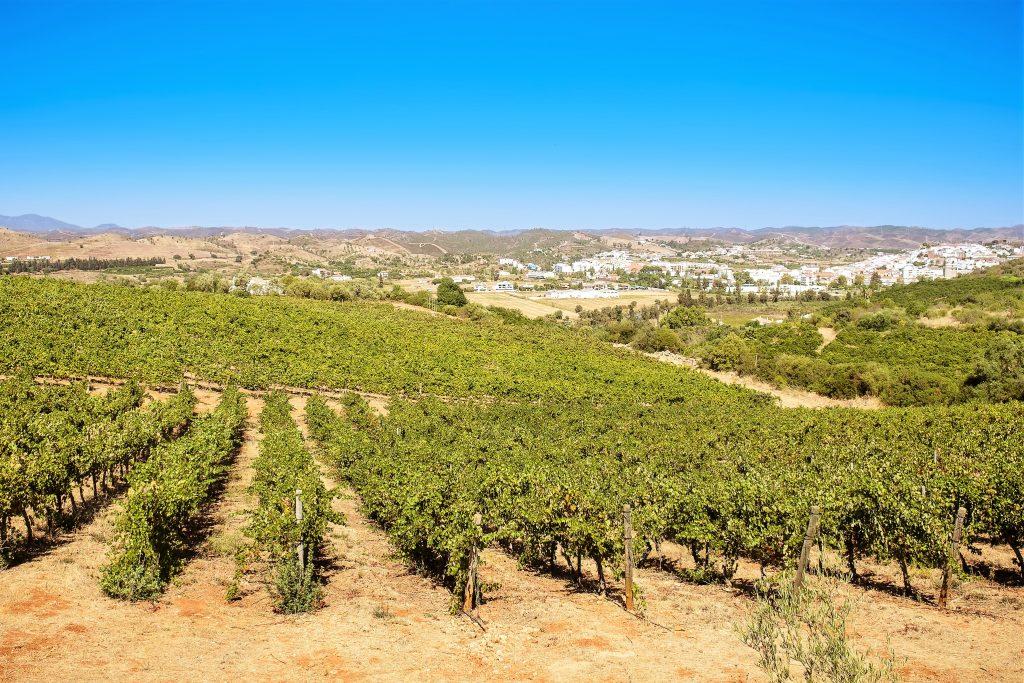 Algarve-Weine profitieren von guten Bedingungen an der Atlantik-Küste Portugals