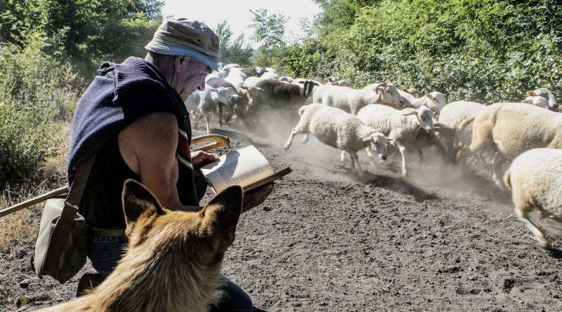 Fotokünstler Jean-Marc Godès hat einen lesenden Schäfer abgelichtet
