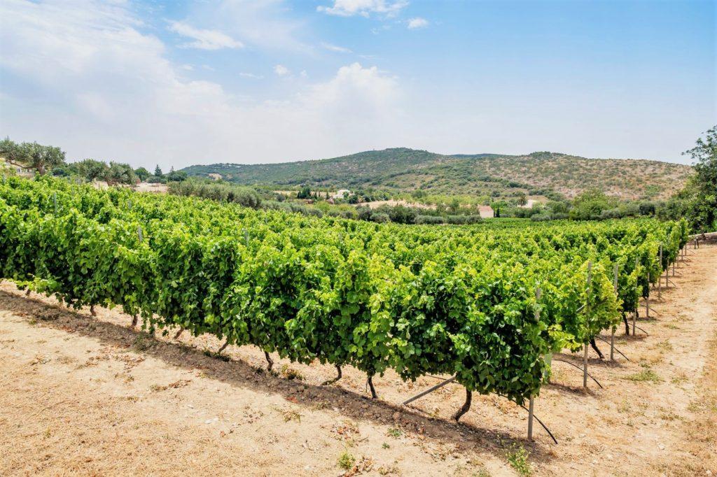 Weißweine, Rotweine und Roseweine kommen an der Algarve auf 1,5 Millionen Flaschen