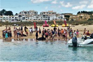 Algarve News zu Befreiung von Seeschildkröte in Lagos