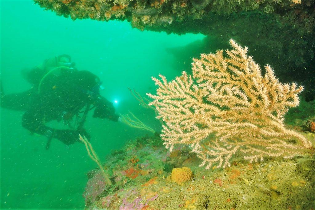 Liebeskomödie im ZDF-Herzkino dreht sich um Korallenriff der Algarve