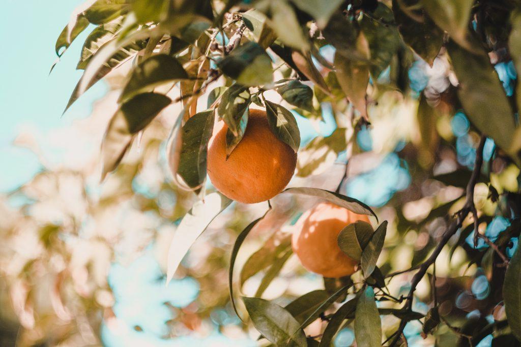 Algarve-Zitrusfrüchte sollen in Hotels und Restaurants der Region üblich werden