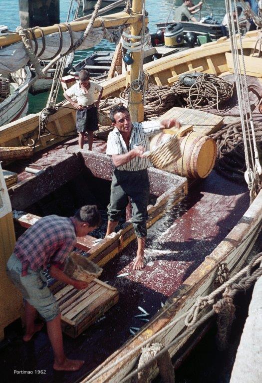Anlieferung von Sardinen per Segelschiff im Hafen von Portimão 1962