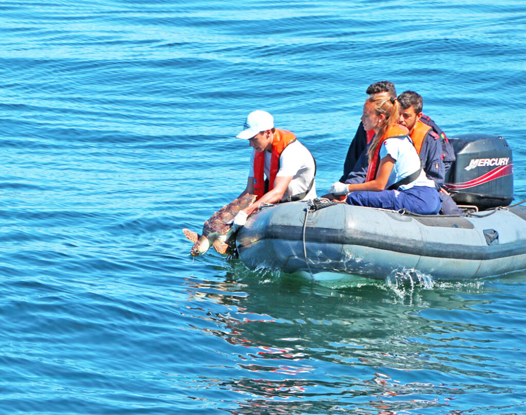 Delfinshows von Zoomarine an der Algarve begleitet von Tierpflege-Aktionen