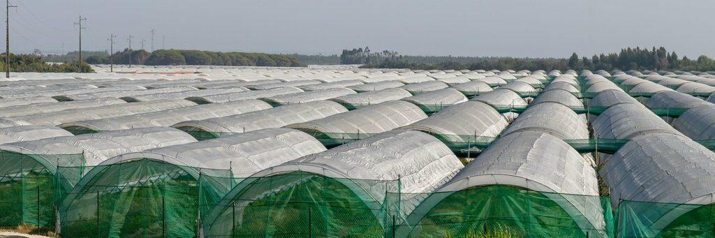 Algarve News zu Gewächshäusern für Intensivlandwirtschaft an der West-Algarve